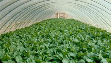 El Gobierno de Aragón convoca 3 millones de euros de ayudas a la innovación tecnológica en el sector agroalimentario a través de la cooperación
